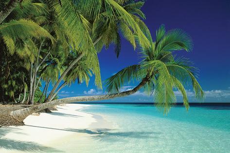 Maldives Beach Póster