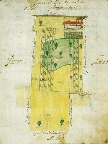 Map of Farm Homesteads and Fields in Morghengo Giclee Print