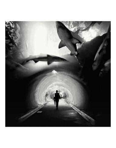 Aquarium study 1 dubai uae