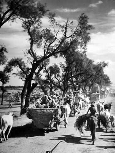 Convoy of Sikhs Migrating to East Punjab After the Division of India Photographic Print