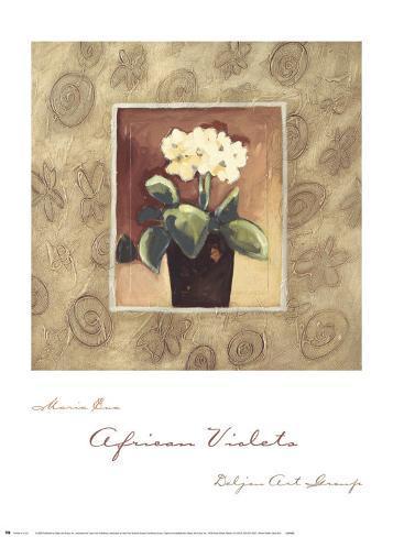 African Violets Art Print
