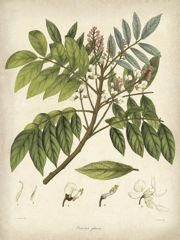Vintage East Indian Plants II Impressão artística