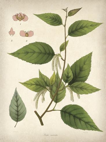 Vintage East Indian Plants III Impressão artística