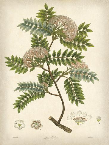 Vintage East Indian Plants VI Impressão artística