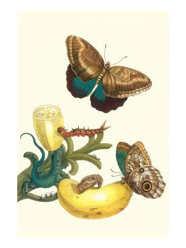 Banana Plant with Teucer Giant Owl Butterfly and a Rainbow Whiptail Lizard Art Print