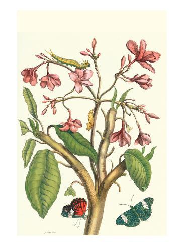 Frangiani and Red Cracker Butterfly Art Print