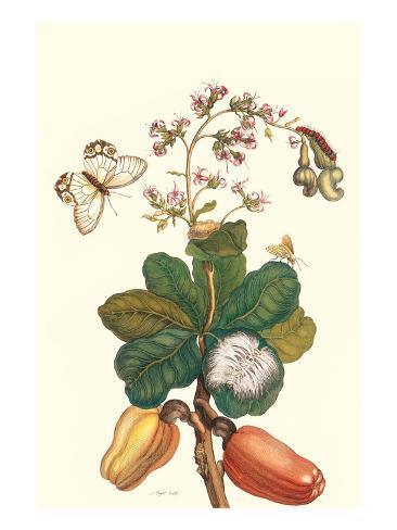 Moth on Cashew Apple Taidevedos