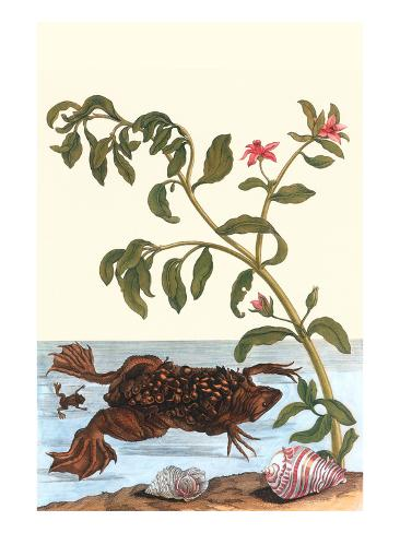 Shoreline Purslane with a Common Surinam Toad Art Print