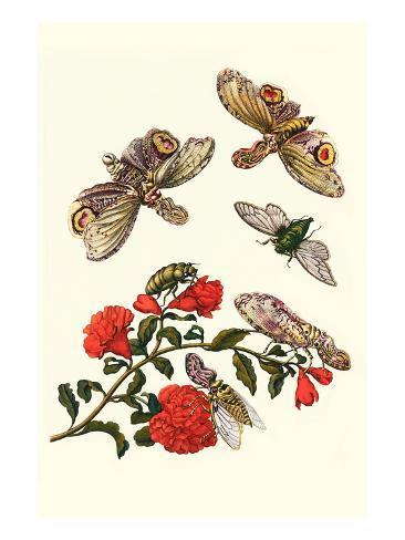 Sundown Cicada and a Peanut-Headed Lantern Fly Art Print
