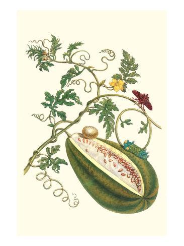 Watermelon and Slug Moth Taidevedos