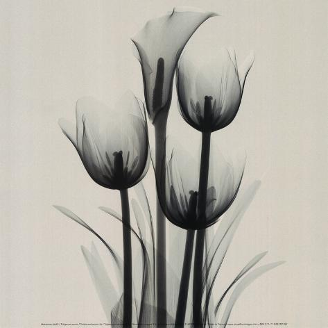 Tulips and Arum Lily Art Print