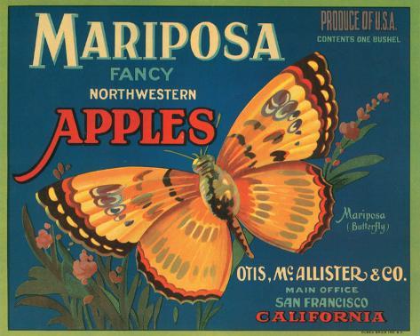 Mariposa Fancy Northwestern Apples Stretched Canvas Print