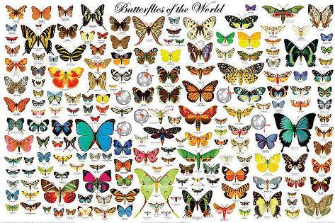 Mariposas del mundo Póster