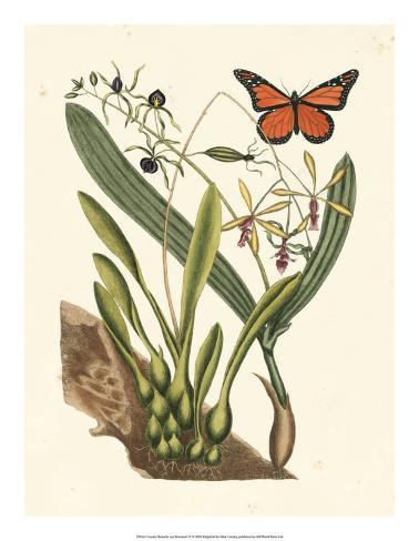 Butterfly and Botanical IV Giclee Print