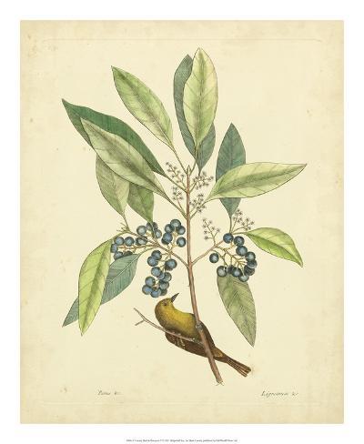 Catesby Bird & Botanical V Giclee Print