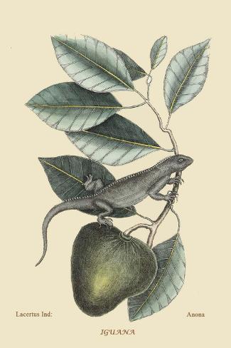 Iguana Lámina