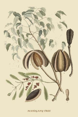 Mahogany Tree Lámina