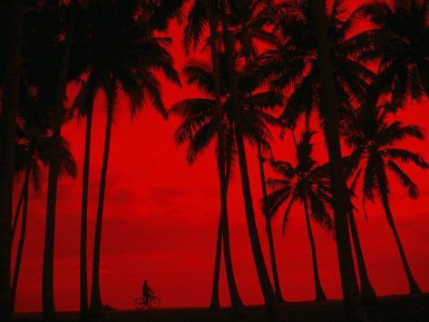 Cyclist and Palm Trees Silhouetted Against Red Sky at Sunset in Midigama, Southern, Sri Lanka Photographic Print