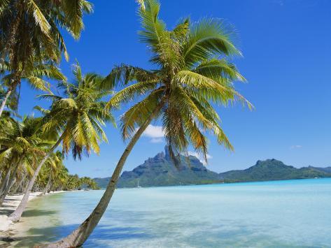 Palm Trees and Beach, Bora Bora, Tahiti, Society Islands, French Polynesia, Pacific Photographic Print