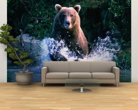 Grizzly Bear Running in Kinak Bay, Katmai National Park, U.S.A. Wall Mural – Large