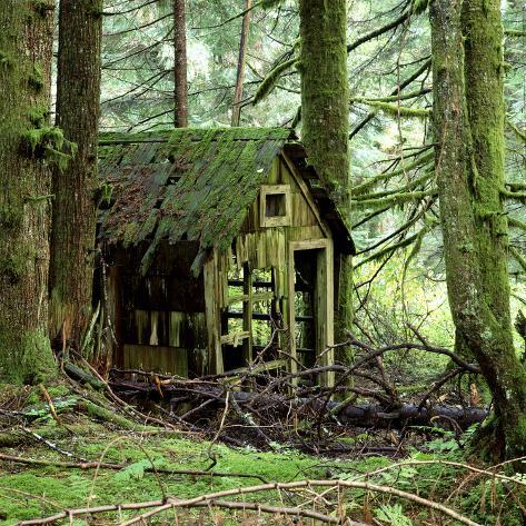 Rotting Wooden Shed Covered in Moss, Washington State, Usa Impressão fotográfica