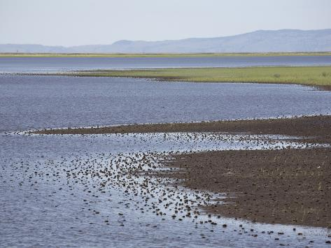 Wetlands of Malheur National Wildlife Refuge, Southeastern Oregon, USA Photographic Print