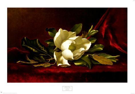 Il fiore di magnolia Stampa artistica