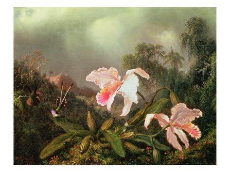 Jungle Orchids and Hummingbirds, 1872 Giclee Print