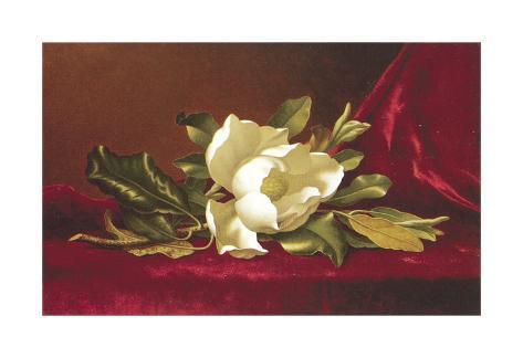 The Magnolia Flower Art Print