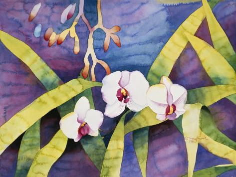 Water Orchids Stampa giclée