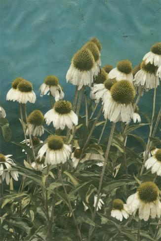 Among the Wildflowers I Giclee Print
