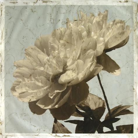 Antiqued Floral and Sky I Giclee Print