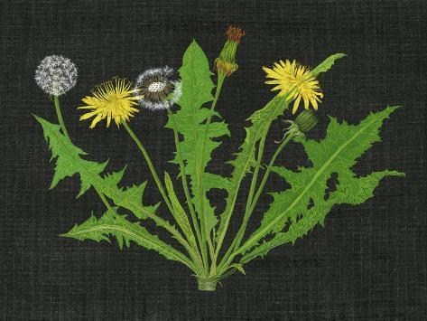 Wild Dandelion I Stampa artistica