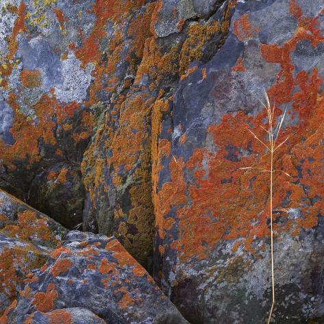 Red Lichen on Rocks Photographic Print