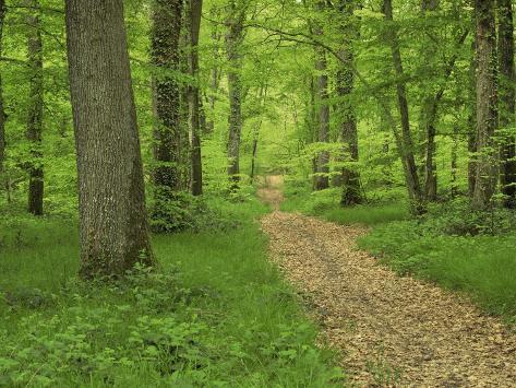 Forest of Chambord, Loir Et Cher, Loire Centre, France Photographic Print