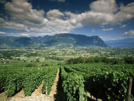 Vineyards Near Chambery, Savoie, Rhone Alpes, France Photographic Print
