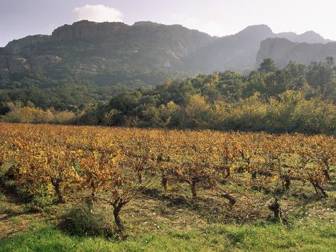 Vineyards Near Roquebrun Sur Argens, Var, Provence, France Photographic Print