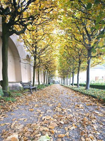 Rose Garden in the Neue Residenz (New Palace) in Bamberg, Germany Photographic Print