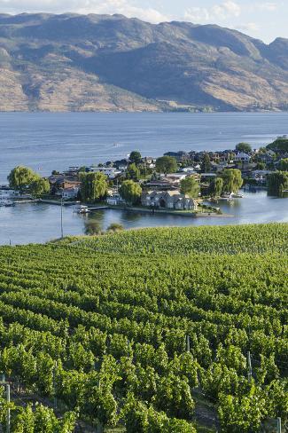 Vineyard and okanagan lake at quails 39 gate winery kelowna for Affitti di cabina okanagan bc