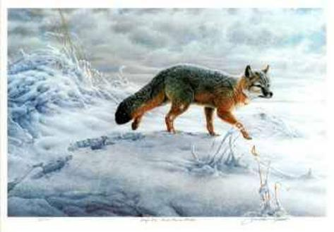 Swift Fox Limited Edition