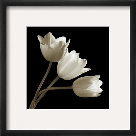 Three Tulips Framed Giclee Print