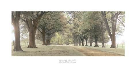 Avenida de árboles Lámina