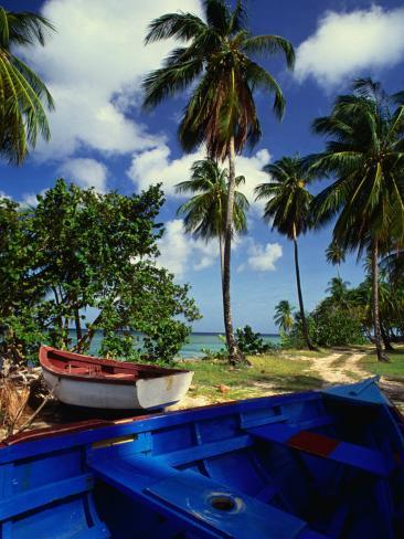 Wooden Fishing Boats Among Palm Trees, Pigeon Point, Trinidad & Tobago Photographic Print