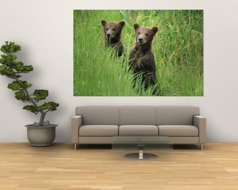 Alaskan Brown Bear Cubs Wait in Long Grass for Their Mother Wall Mural