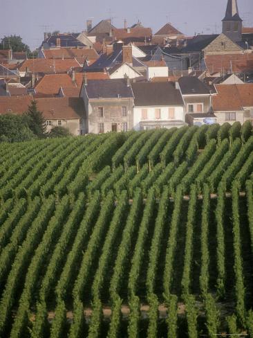 Vineyards in the Champagne Region, France Valokuvavedos