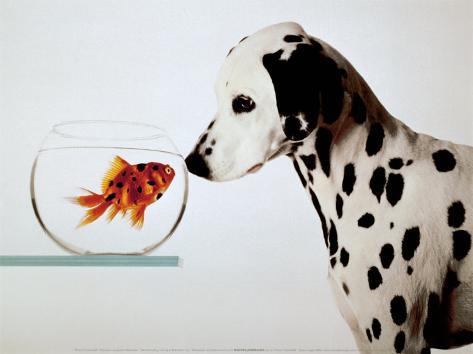 Dalmation Dog Looking at Dalmation Fish Art Print