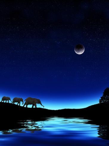 Three Elephants Walking Past Water Photographic Print