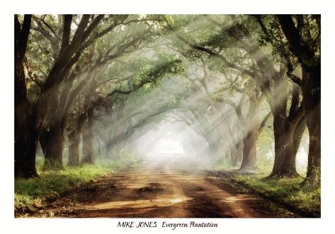 Evergreen Plantation Art Print