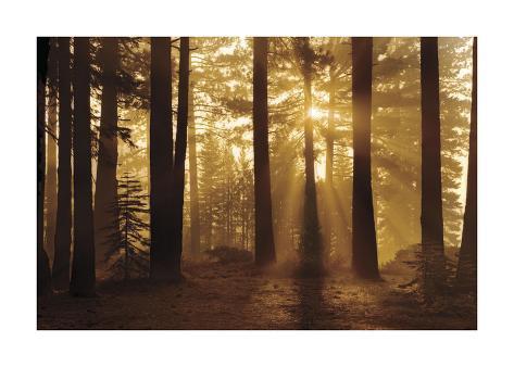 Tahoe Smoky Sunrise Giclee Print