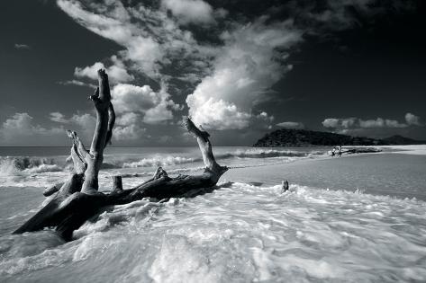 Driftwood Shore Giclee Print